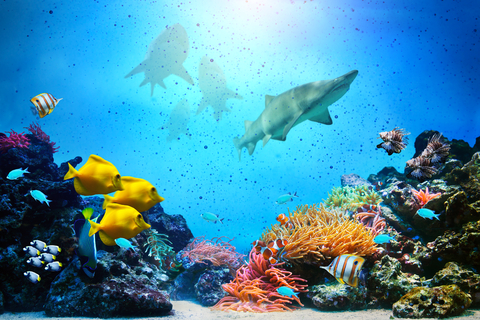 http://www.dreamstime.com/stock-photography-underwater-scene-coral-reef-fish-groups-colorful-sharks-sunny-sky-shining-clean-ocean-water-high-res-image30556062